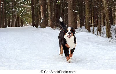 Joven perro de montaña