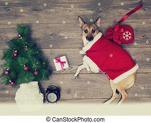 Juego de Navidad, perro