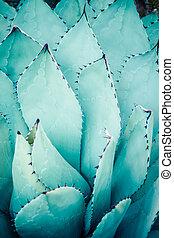 juntos., bunched, hojas, puntiagudo, agave, agudo, planta