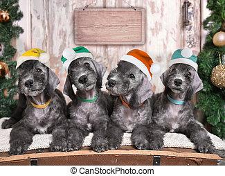 juntos, cuatro, navidad, perritos