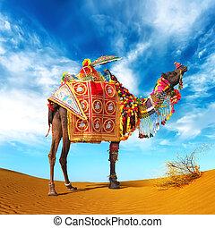 justo, fondo., fiesta, viaje, camello, india, pushkar., aventura, desert., rajasthan, paisaje