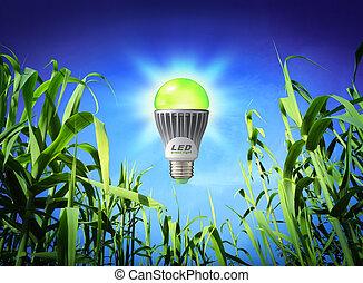 lámpara, crecimiento, -, fue adelante, ecología