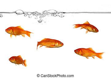 Línea de agua y peces de oro