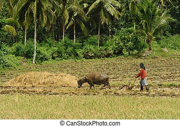 La agricultura primitiva asiática