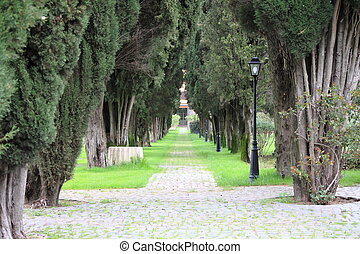 La carretera de árboles