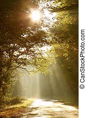 La carretera del bosque en la mañana de otoño