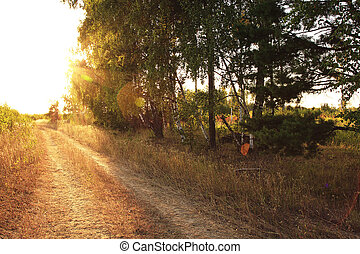 La carretera del bosque