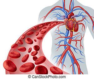 La circulación del corazón