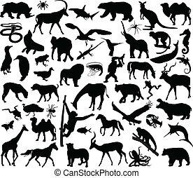 La colección de animales