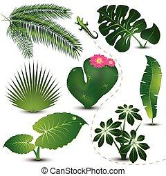 La colección de hojas tropicales