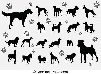 La colección de perros