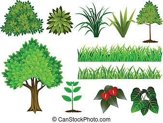 La colección de plantas y árboles