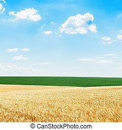 La cosecha dorada y los campos verdes bajo el cielo azul y nublado