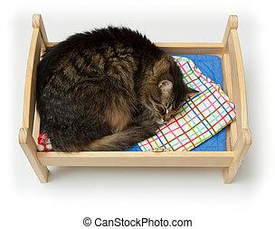 La cuna de los juguetes y un gato