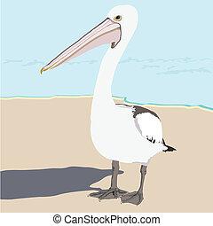 La escena de la playa de Pelican