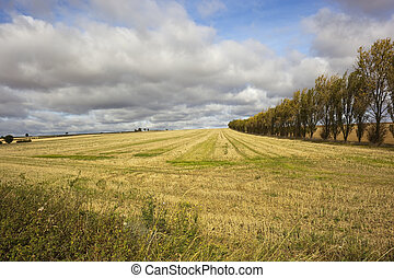 La escena del campo