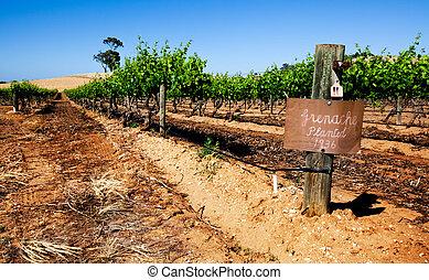 La escena del viñedo