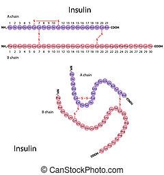 La estructura de la insulina humana, Eps8