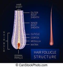 La estructura del folículo del pelo