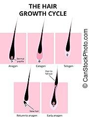La estructura del pelo