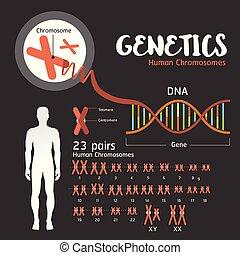 La estructura genética del ADN