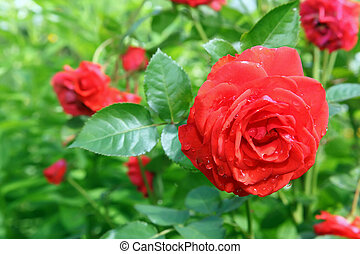 La flor creció en el jardín