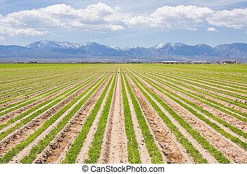 La granja sur de California