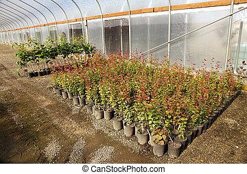 La guardería de la planta Greenhouse, Oregon