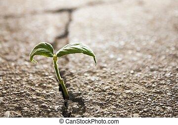 La hierba crece
