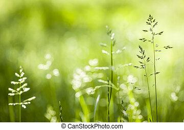 La hierba verde de junio floreciendo