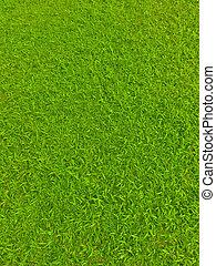 La hierba verde del campo de fútbol