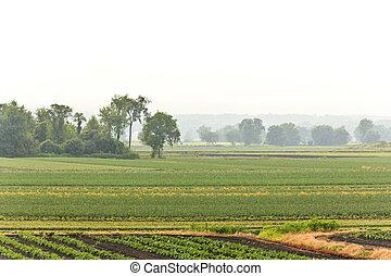 La humedad de la granja de verano