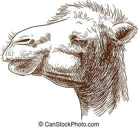 La ilustración de la cabeza de camello