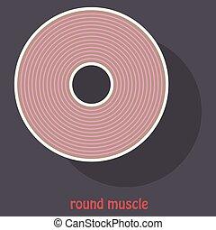 La ilustración de la estructura de la anatomía muscular esquelética