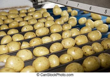La industria de las patatas