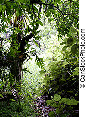 La jungla tropical