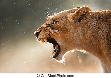 La leona dispersa los dientes peligrosos