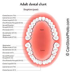 La lista dental de adultos
