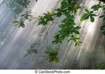 La luz del sol matinal en vegetación