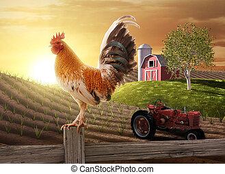 La mañana de la granja