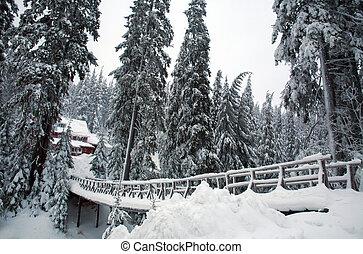 La nieve cubría el puente de madera en el bosque de pinos de invierno