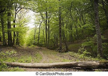 La pista del bosque