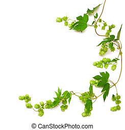 La planta de Hops tiene vid