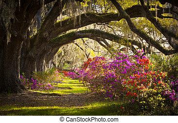 La plantación Charleston SC vive en los robles, el musgo español, las flores de azalea florecen en primavera
