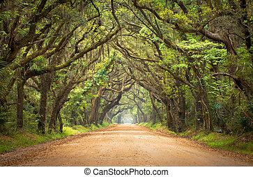 La plantación de Botany Bay escalofriante carretera de tierra escalofriante túnel de robles con musgo español en la isla de Edisto, SC