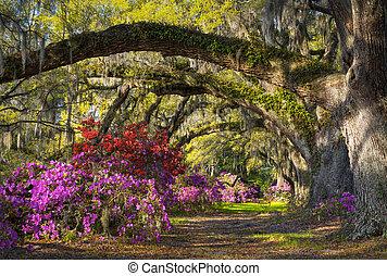 La primavera de Charleston florece azalea flores del sur de carolina jardín bajo robles y musgo español