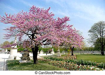 La primavera en París, el jardín del louvre