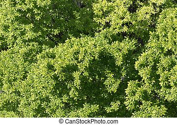La primera vista del árbol