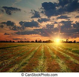 La puesta del sol en el campo