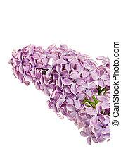 La rama de lila